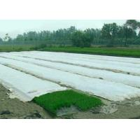 China Spunbond Non Woven Agriculture Cover Fabric , Landscape PP Fabrics for Green House wholesale