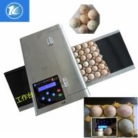 China High Resolution Egg Marking Equipment ,  Edible Grade Quick Dry Ink Egg Printer wholesale