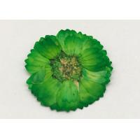China Dye Green Dried Flowers , Dried Daisy Flowers For Epoxy Recycled Flowers wholesale