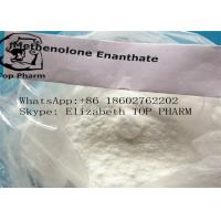 China Muscle Building Steroids Methenolone Enanthate / Primobolan Enanthate CAS 303-42-4 wholesale