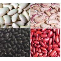 China Best Crop HPS Production and Processing Small/Mid/Big Black Kidney Beans OEM wholesale