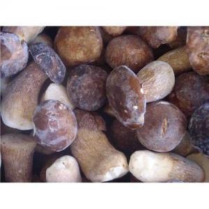 China Supply wild mushroom wholesale