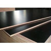 China Black Color Phenolic Film Faced Plywood 12mm - 18mm Thickness Environmental Friendly wholesale