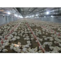 China Poultry Farm Equipment wholesale