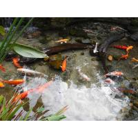 China Professional Natural Zeolite Filter Media for Ponds with High CEC value on sale