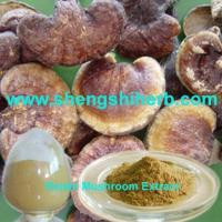 China Reishi Mushroom Extract wholesale