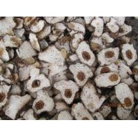 China High Quality Poria Cocos Wolf  Extract/ Poria cocos wolf,poria cocos extract powder( 5%Polysaccharide) wholesale