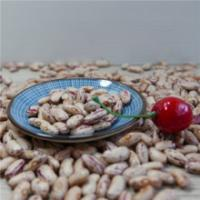 China Natural Organic Agro-products Processing Grade AA 200-240pcs/100g Light speckled kidney bean wholesale