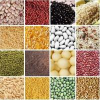 Quality Natural Organic 220-230/300-350/360-380/450-500/500-550/550-600pcs/100g High Quality Black Kidney Beans for sale