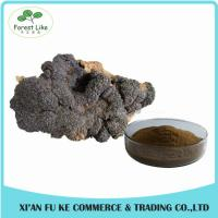 China Natural Treat Diabetes Innocuous Health Products Chaga Mushroom Extract Powder with Polysaccharides,Betulin on sale
