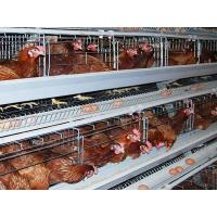 China Layer Cages wholesale