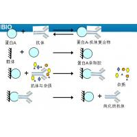 Buy cheap Recombinant protein A manufacturer Antibody Test SPA Binding to IgG from wholesalers