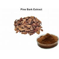 China 95% Proanthocyanidins Anthocyanin Extract Powder Pine Bark Extract Preventing Angiocardiopathy wholesale