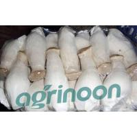 China fresh king oyster mushroom wholesale