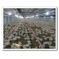 China Automatic Poultry Farming Equipment wholesale