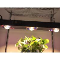 China Dimmable COB LED Grow light 300W / Gardening timmer system CREE CXB 3590COB wholesale