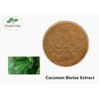 Quality High Purity Natural Cacumen Biotae Extract 100% Pass 80 Mesh Leaf Part for sale