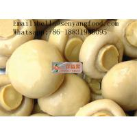 China canned fresh button mushroom marinated whole from China on sale