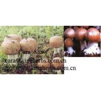 China China Agaricus Blazei Mushroom Extract for sale on sale