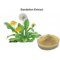 China 4% Flavonoids Organic Dandelion Root Extract , Dandelion Leaf Extract Anti - Inflammatory And Antiviral wholesale