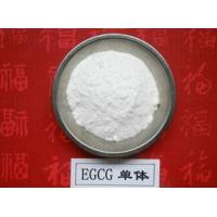 China 100% Natural Green Tea Extract Polyphenols and EGCG 98% powder wholesale