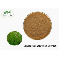 Buy cheap Fine Size Plant Herbal Extract Powder Natural Equisetum Arvense Extract from wholesalers