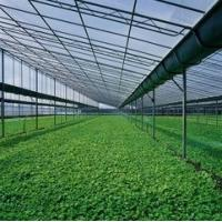 China Twin - wall Hollow Greenhouse Polycarbonate Sheets , greenhouse wall panels on sale