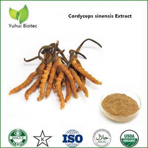 China Cordyceps Sinensis Extract,cordyceps extract,cordyceps sinensis extract powder on sale