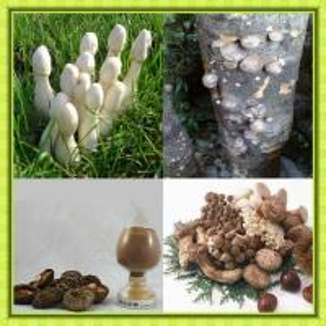 China mushroom Extract wholesale