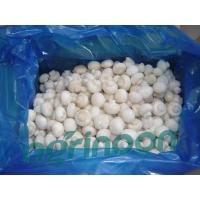 China frozen champignon mushroom wholesale