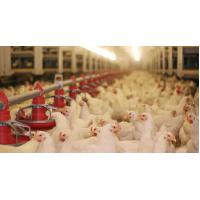 China Durable Full Set Poultry Farm Equipment from China wholesale