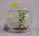 China Plastic modern acrylic fish tank wholesale