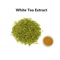 China White Tea Leaf Extract Treating Measles, 30% Polyphenols White Tea Extract For Skin wholesale
