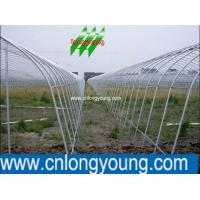 China Agricultural Greenhouse wholesale