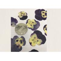 China Purple Pansy Real Pressed Flowers True Plant Material For Press Picture Ornaments wholesale