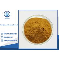 China CAS 73-03-0 Cordyceps Sinensis Extract 10%-98% Cordycepin For Food Supplement on sale