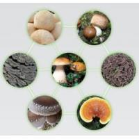 China Edible and Medicinal Mushrooms wholesale
