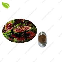 China Ganoderma Extract >herbal extract wholesale