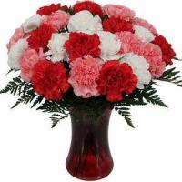 Buy cheap Two Dozen Mixed Carnations NO.87 from wholesalers