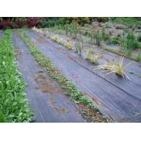 China Ground Cover Net wholesale