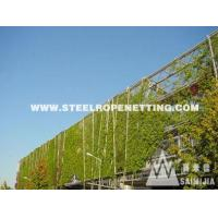China Stainless Steel Cable Mesh Green plant climbing rope netting wholesale