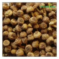 China Agaricus Blazei Extracts wholesale