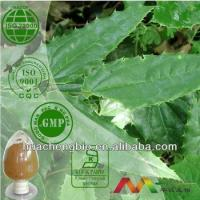 China Natural Epimedium Leaf Extract wholesale