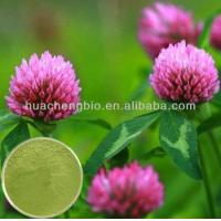 China Trifolium Pratense Flower Extract wholesale