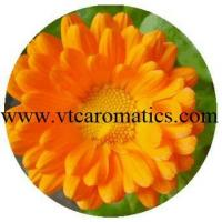 China Calendula Essential Oil wholesale