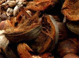 Quality Cocohusk for sale