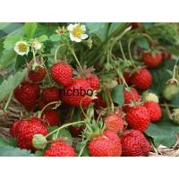 Buy cheap Fruit Puree PUREE from wholesalers