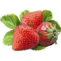 Buy cheap Fruit Puree Strawberry Puree Concentrate from wholesalers