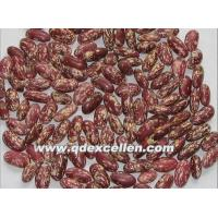 China Dried Products Light speckled Beans wholesale