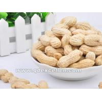 China Dried Products Peanuts wholesale